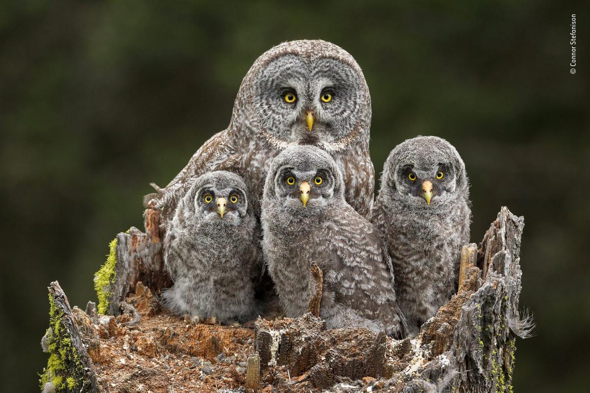 Изумляющие фотографии дикой природы с конкурса LUMIX People_s Choice Award 10