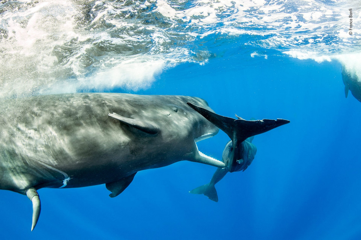 Изумляющие фотографии дикой природы с конкурса LUMIX People_s Choice Award 14