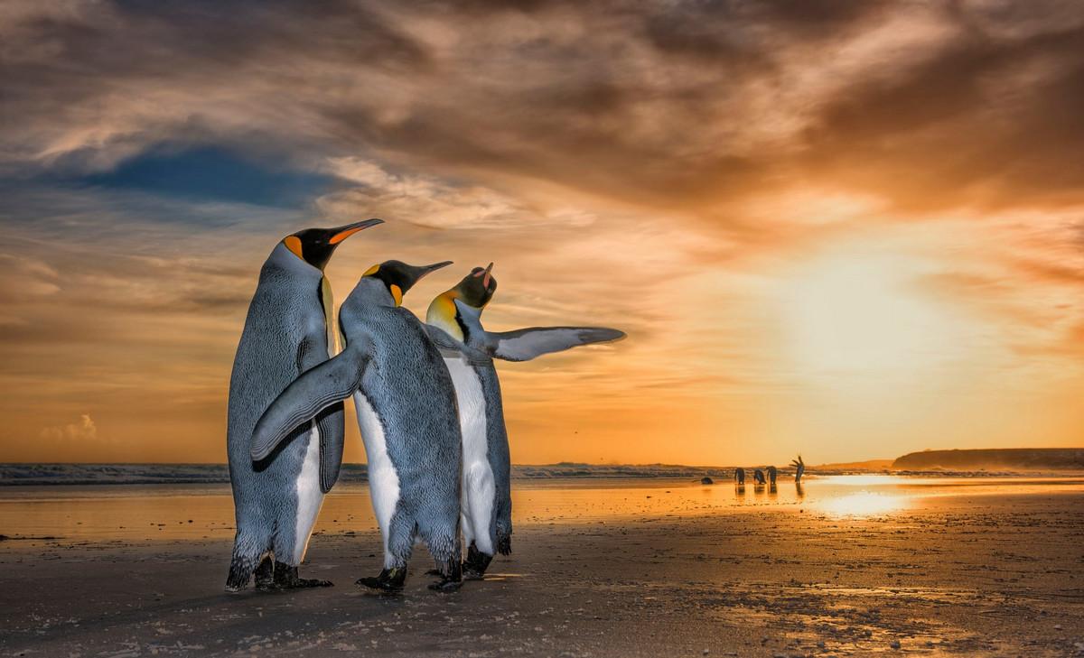 Изумляющие фотографии дикой природы с конкурса LUMIX People_s Choice Award 3