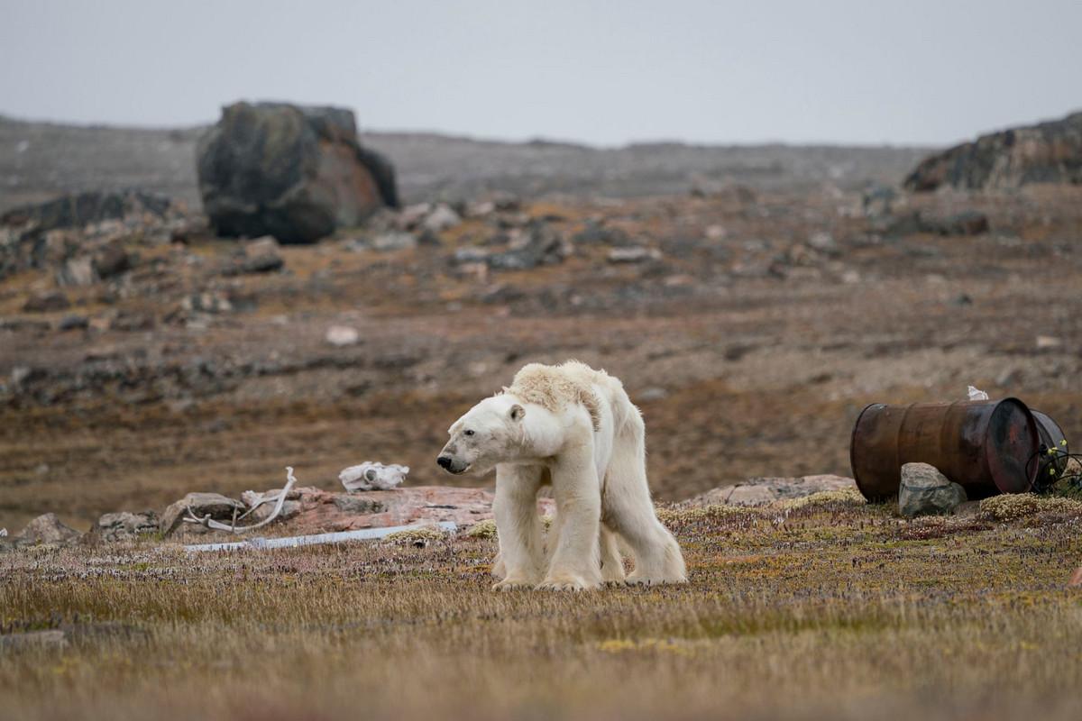 Изумляющие фотографии дикой природы с конкурса LUMIX People_s Choice Award 4