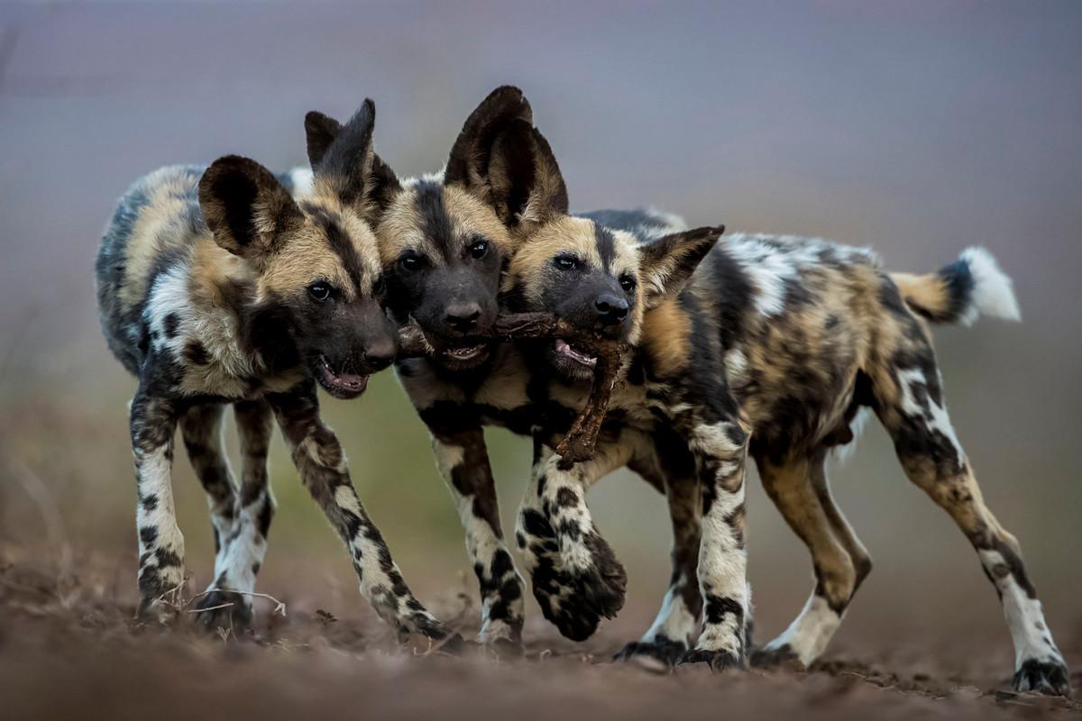 Изумляющие фотографии дикой природы с конкурса LUMIX People_s Choice Award 5