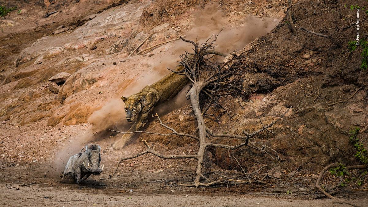 Изумляющие фотографии дикой природы с конкурса LUMIX People_s Choice Award 7