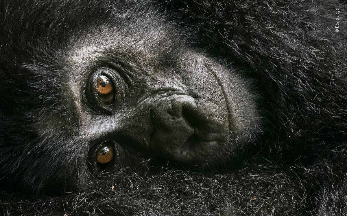 Изумляющие фотографии дикой природы с конкурса LUMIX People_s Choice Award 8