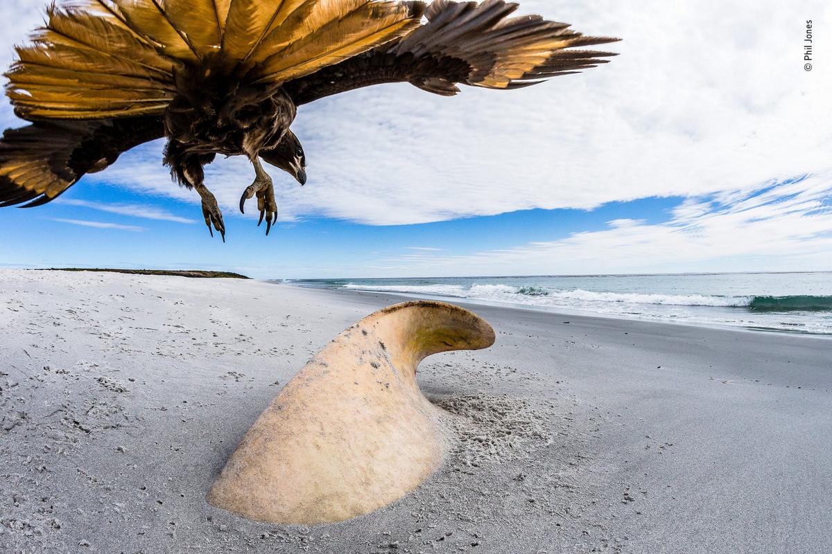 Изумляющие фотографии дикой природы с конкурса LUMIX People_s Choice Award 9