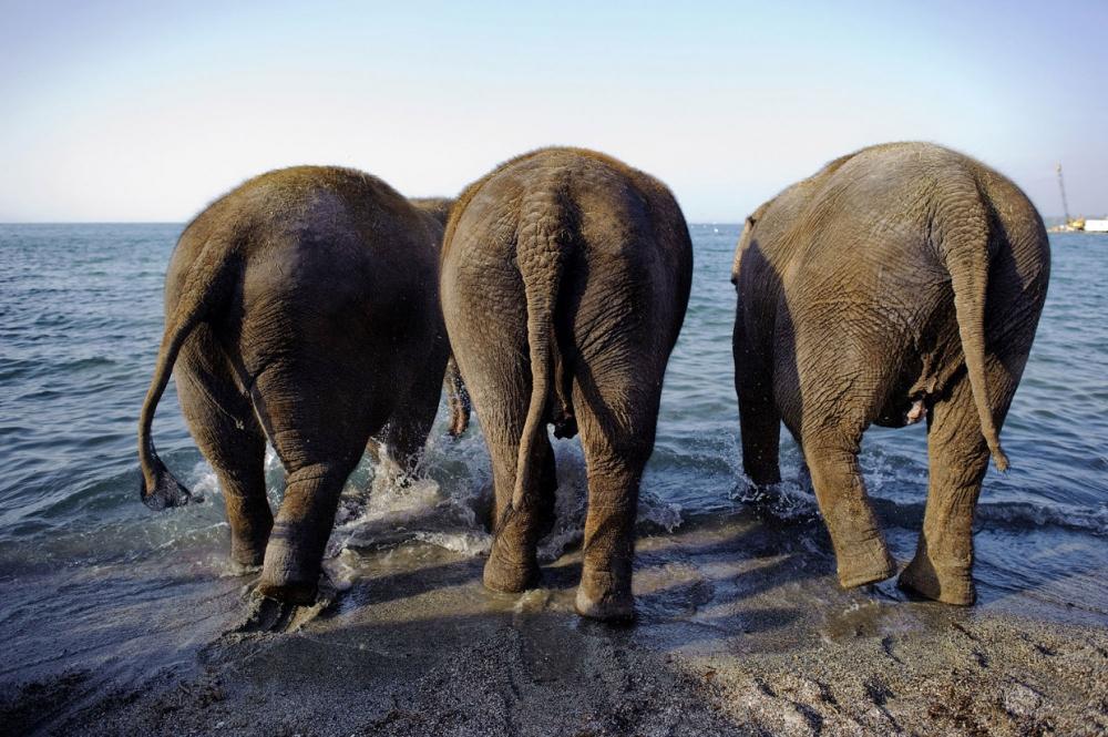 Как прошел Всемирный день слонов 2017 (14)