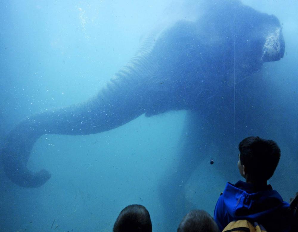 Всемирный день слонов: интересные фотографии со всего мира