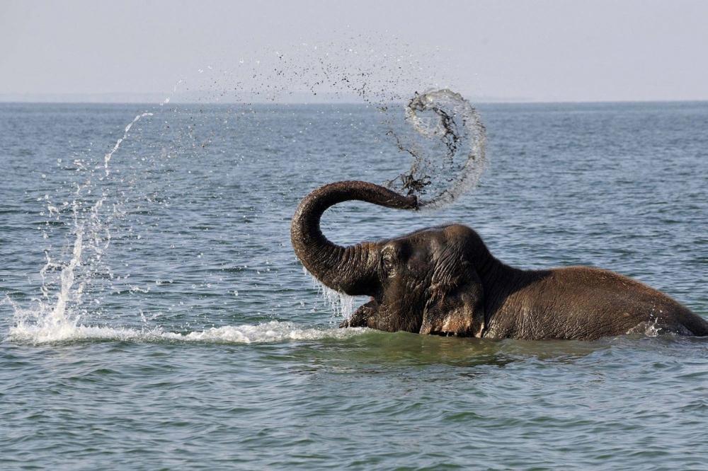 Как прошел Всемирный день слонов 2017 (7)