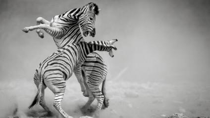 Лучшие черно-белые работы фотоконкурса Siena International Photo Awards 2018