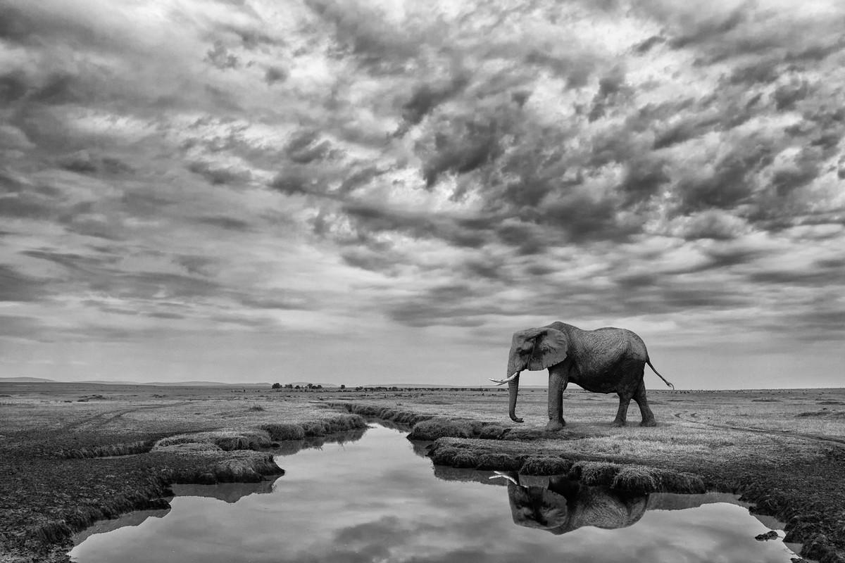 Победители в категории «Монохром» фотоконкурса Siena International Photo Awards 2018 8
