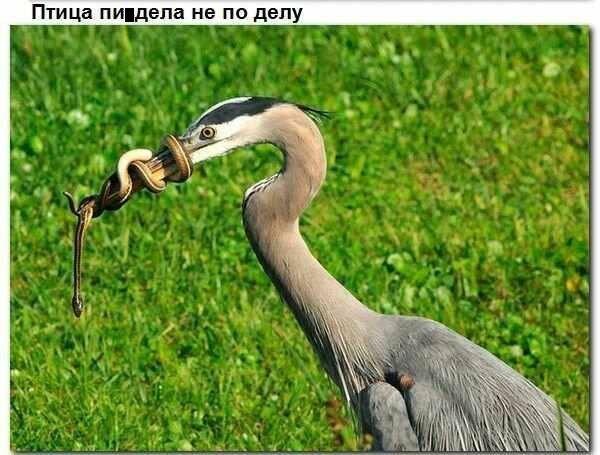Подборка старых мемов и баянов_28 фото_ (11)