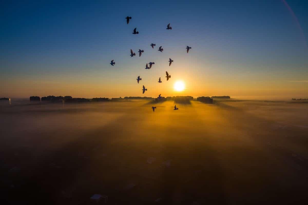 Прекрасные виды с воздуха в фотографиях победителей конкурса Dronestagram 13