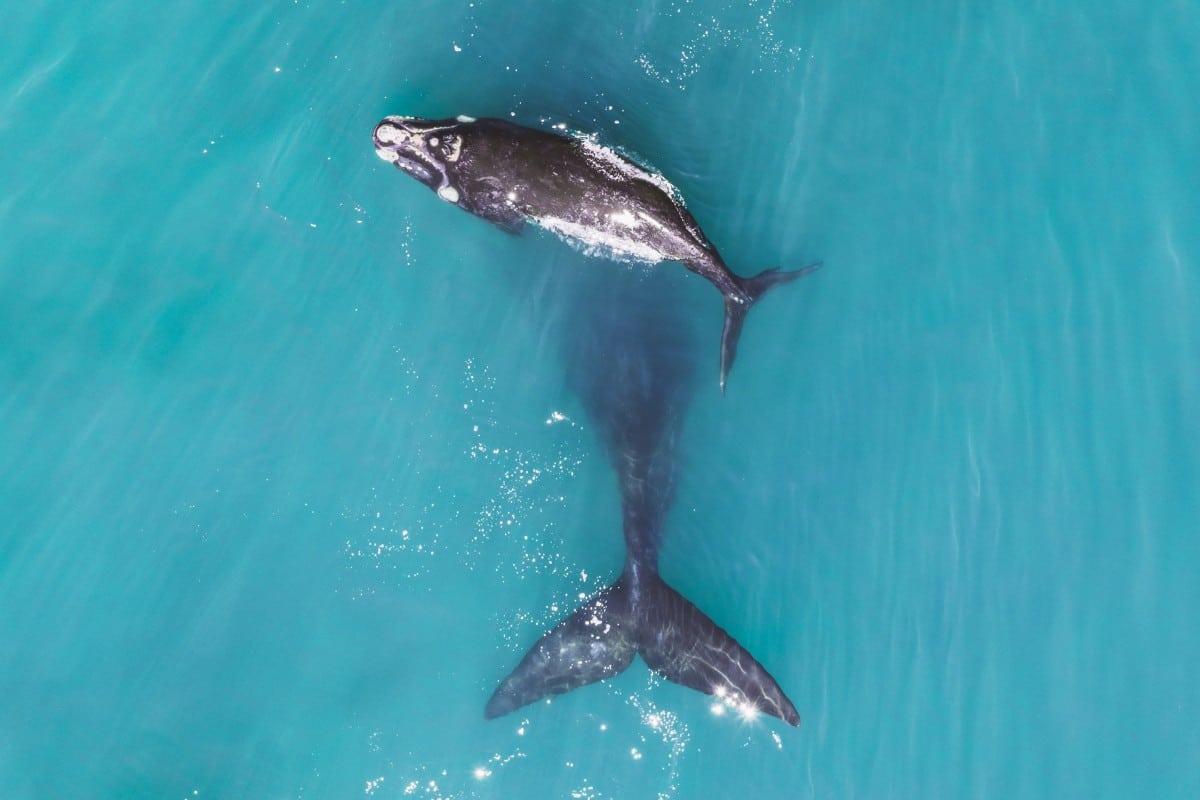 Прекрасные виды с воздуха в фотографиях победителей конкурса Dronestagram 18