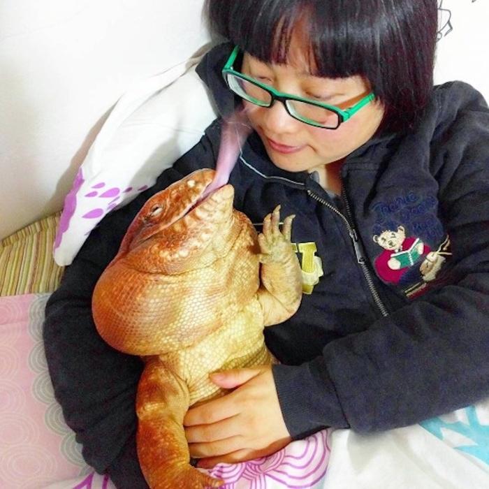 Ящерица тегу – забавное домашнее животное (5)