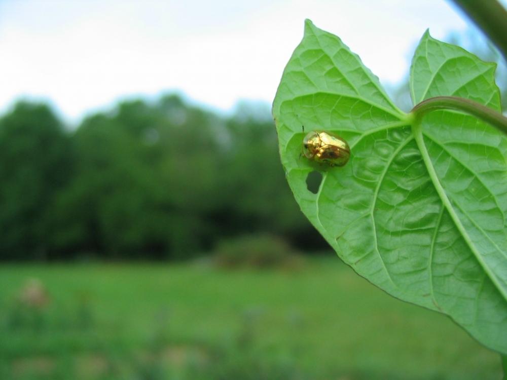Золотая черепаха (7)
