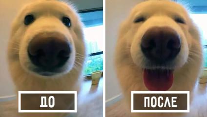 Люди публикуют в сети фотографии своих животных до и после того, как их похвалили
