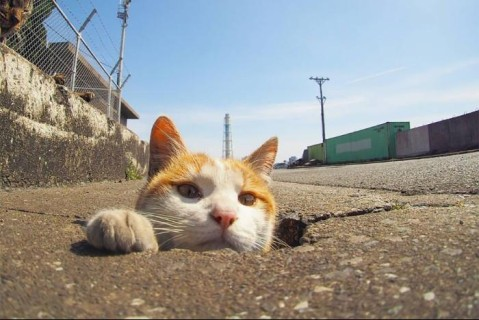 Японские кошки показали, что нужно делать с дырами в асфальте