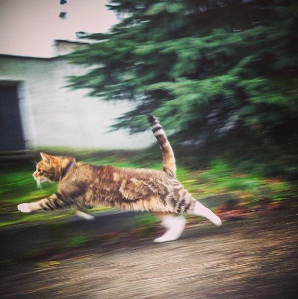 16_nelepih_situaciy_s_kotikami_14