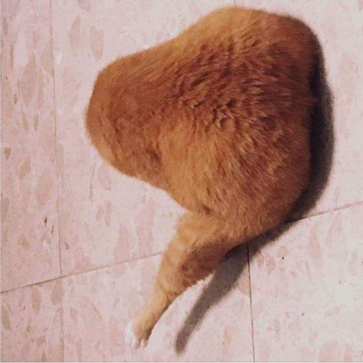 18фото котиков_ которых человеческие папарацци застали всамый неподходящий момент (2)