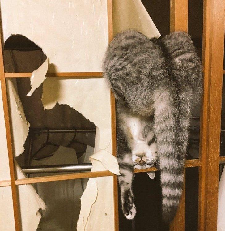 18фото котиков_ которых человеческие папарацци застали всамый неподходящий момент (4)