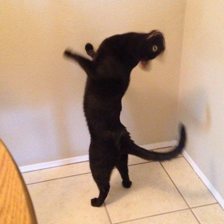 18фото котиков_ которых человеческие папарацци застали всамый неподходящий момент (9)