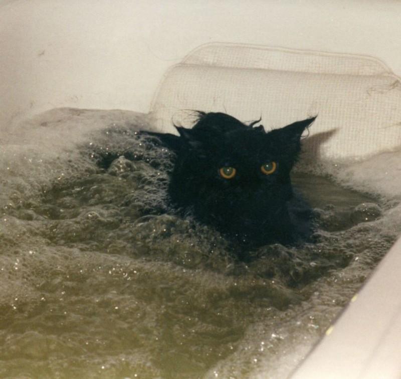 Дикие и домашние животные купаются (4)