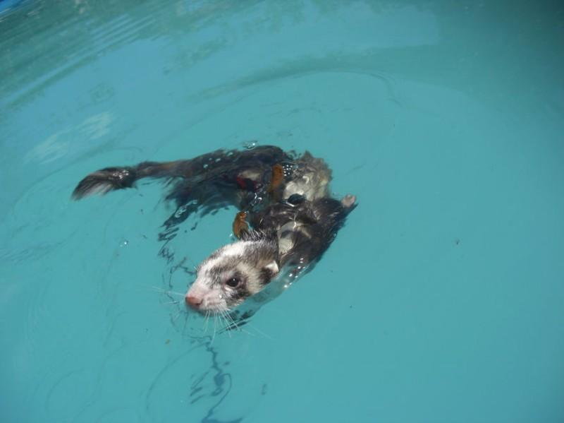 Дикие и домашние животные купаются (9)