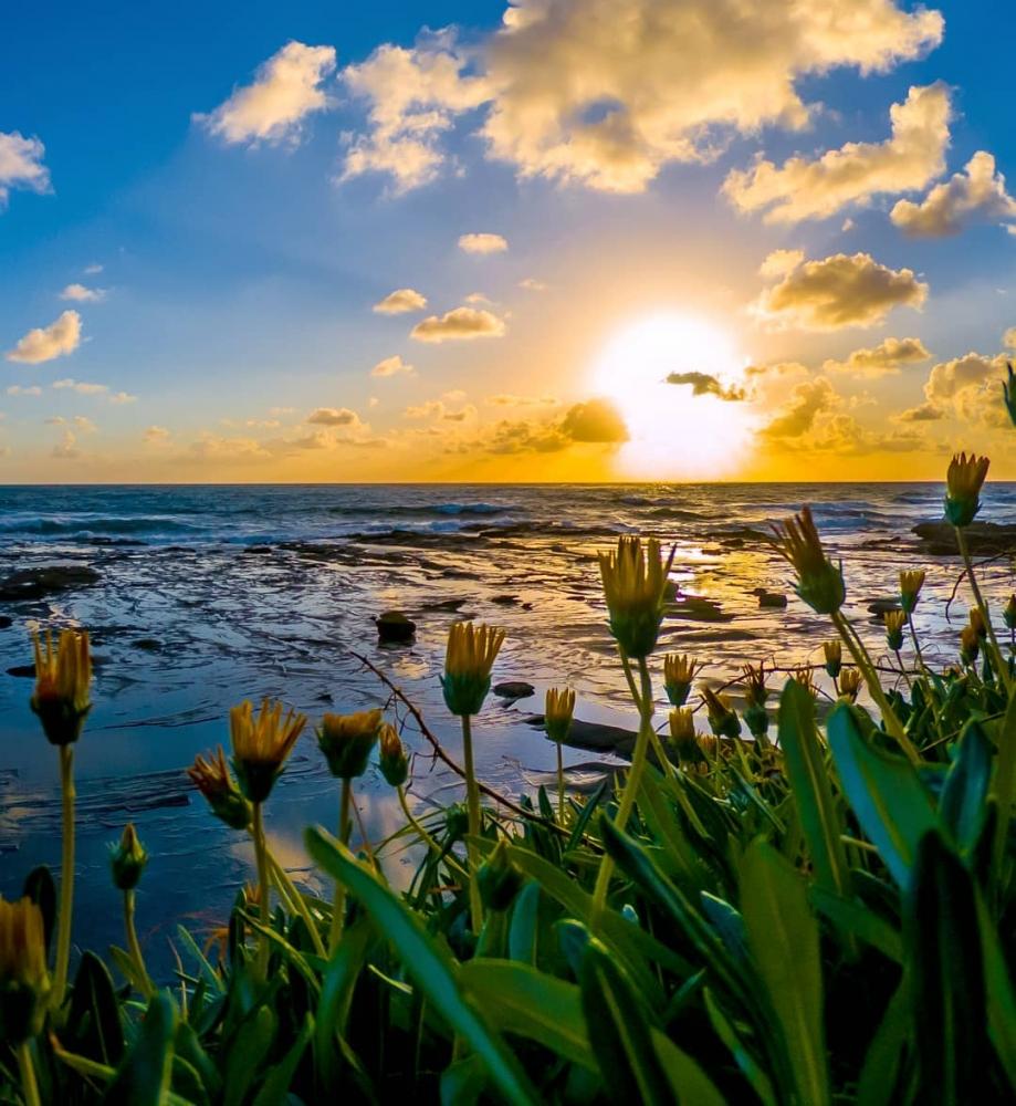 Красивые австралийские пейзажи на снимках Митчелла Петтигрю (11)