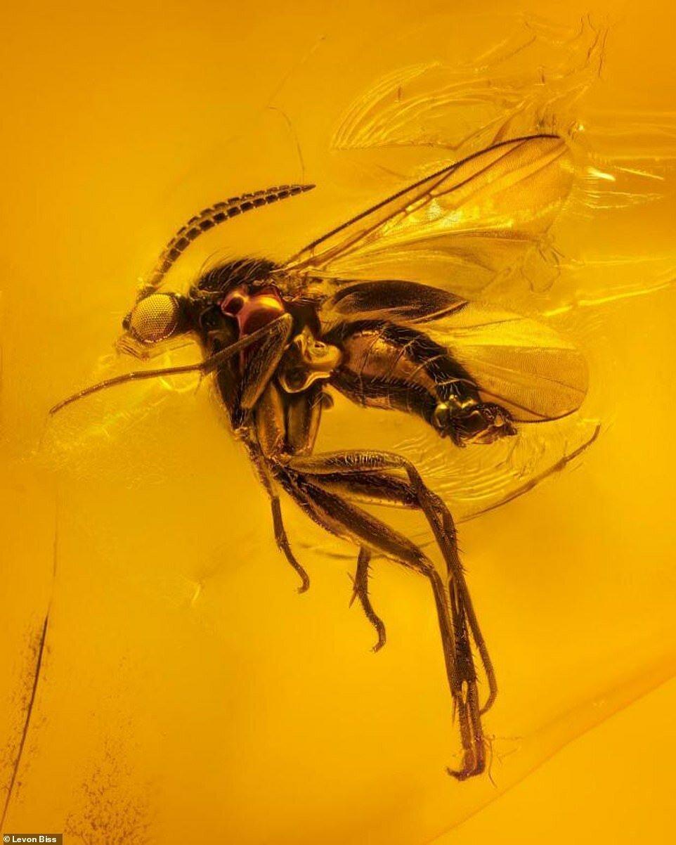 Потрясающие макроснимки древних насекомых в янтаре (2)