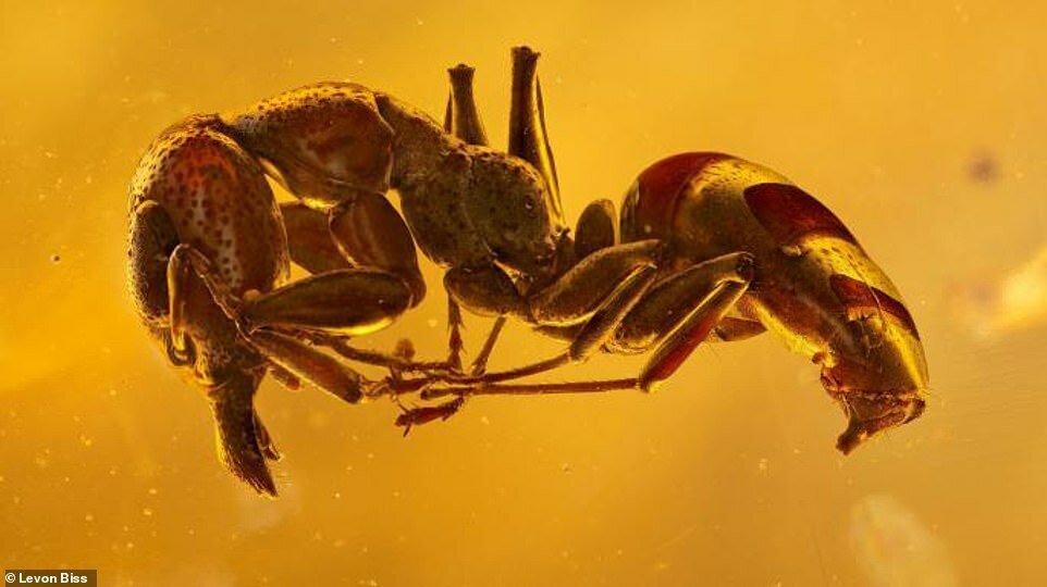 Потрясающие макроснимки древних насекомых в янтаре (3)