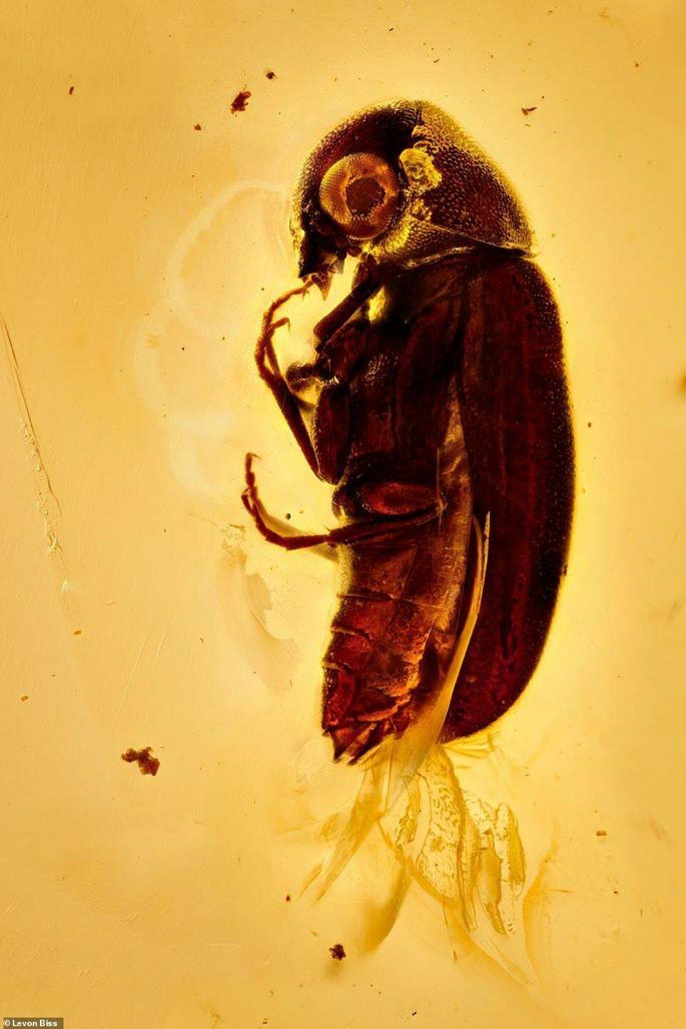 Потрясающие макроснимки древних насекомых в янтаре (4)