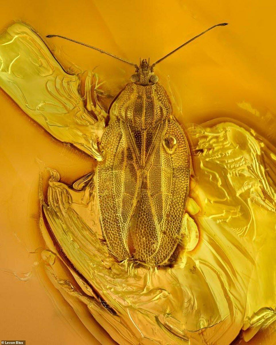 Потрясающие макроснимки древних насекомых в янтаре (5)