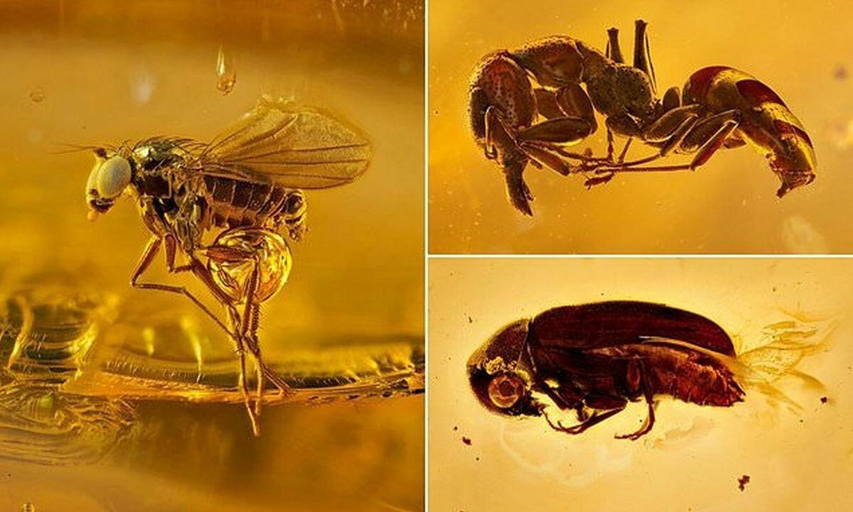 Макроснимки насекомых, которые провели в янтаре более 40 млн лет