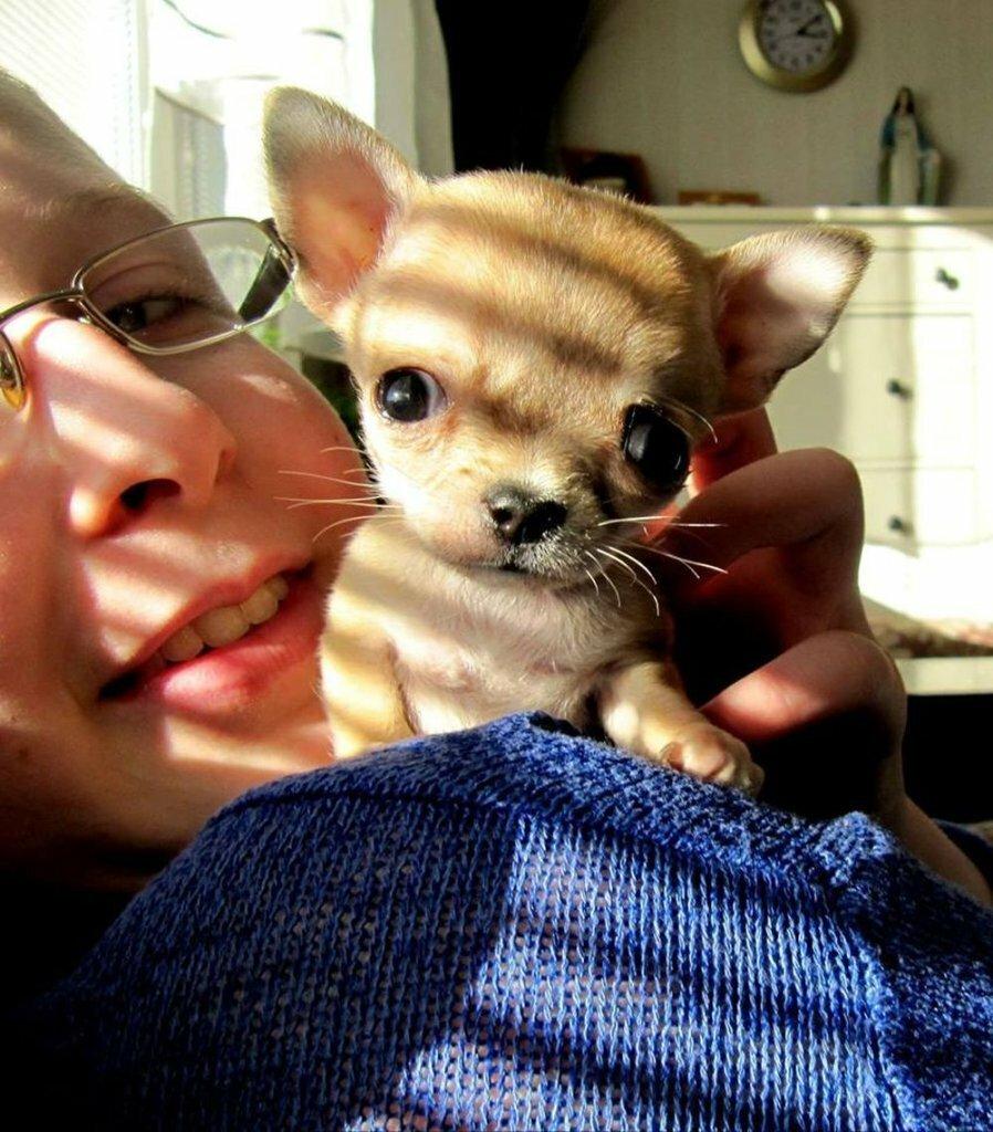 Туди — самая маленькая собака в мире_ (5)
