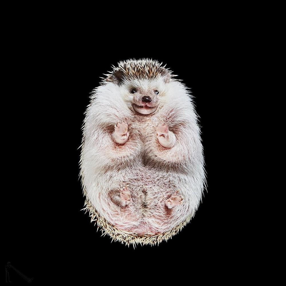 «Взгляд снизу»_ чудные фотографии животных в проекте Андриуса Бурбы 01