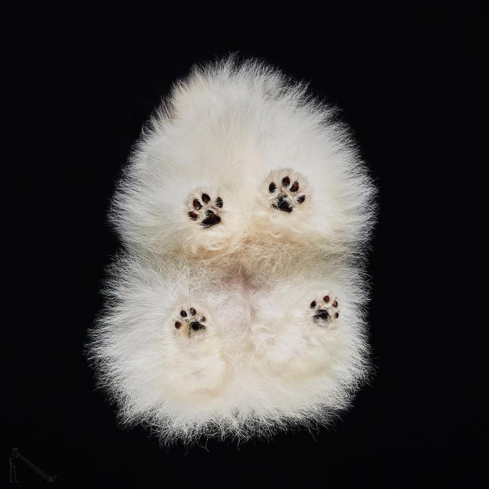 «Взгляд снизу»_ чудные фотографии животных в проекте Андриуса Бурбы 02