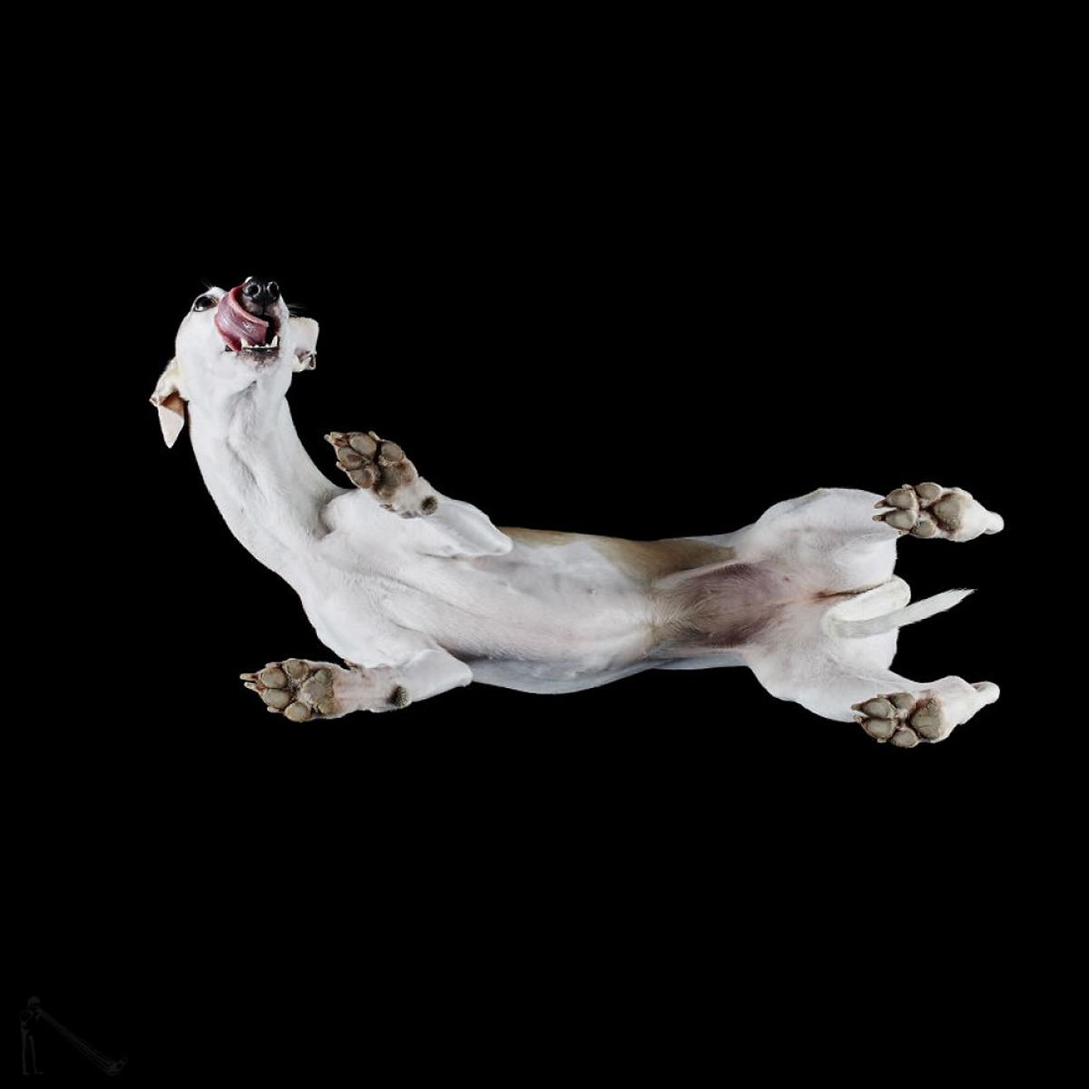 «Взгляд снизу»_ чудные фотографии животных в проекте Андриуса Бурбы 10