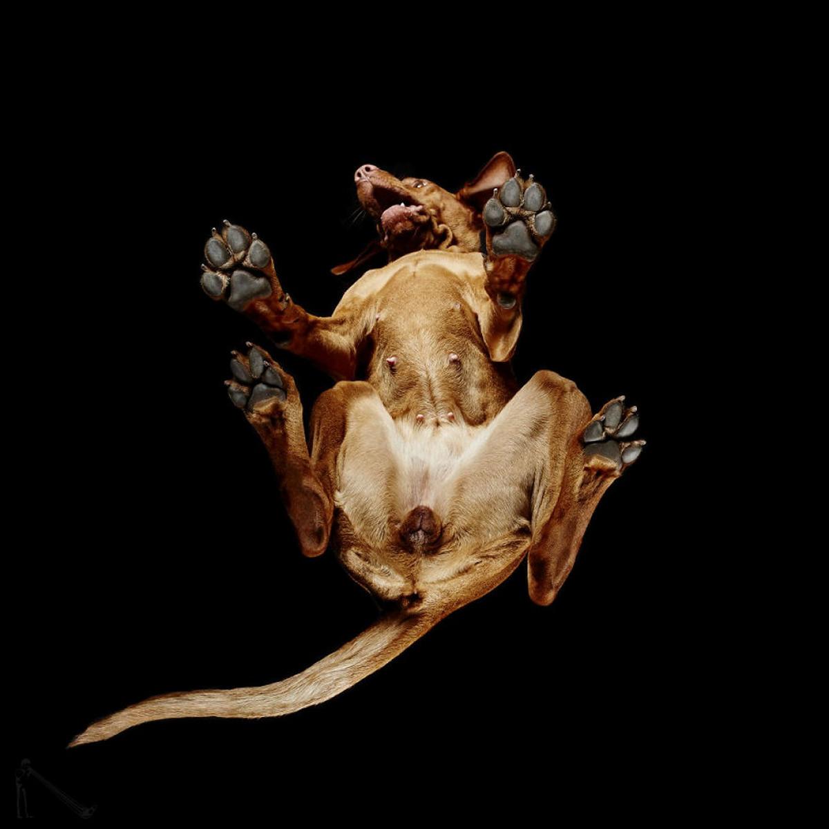 «Взгляд снизу»_ чудные фотографии животных в проекте Андриуса Бурбы 11
