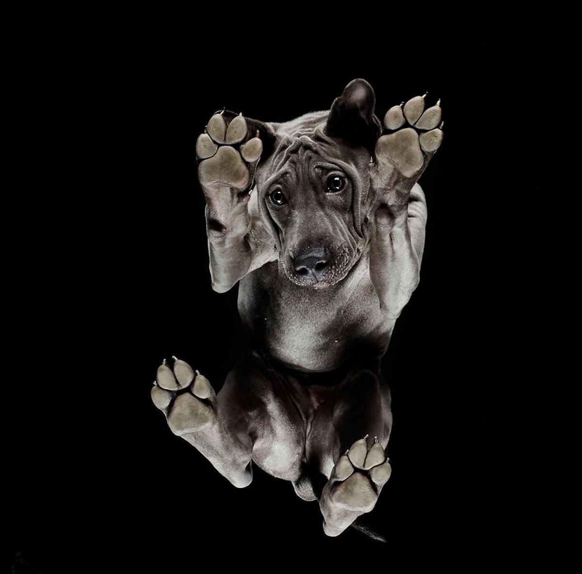 «Взгляд снизу»_ чудные фотографии животных в проекте Андриуса Бурбы 2
