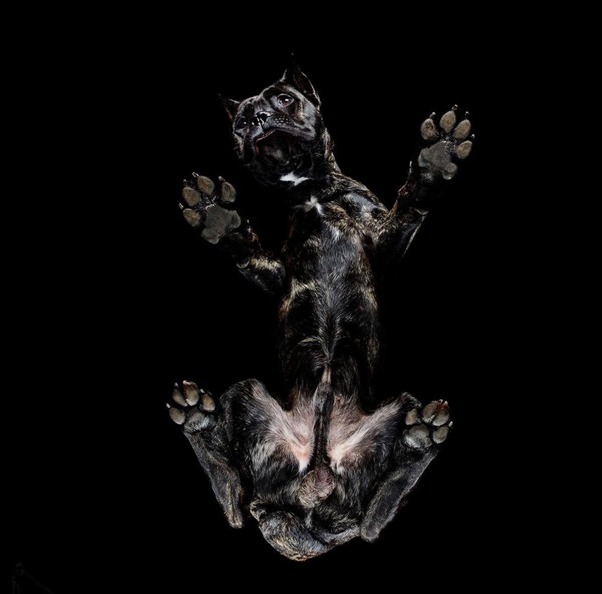 «Взгляд снизу»_ чудные фотографии животных в проекте Андриуса Бурбы 5