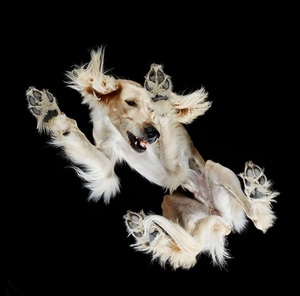 «Взгляд снизу»_ чудные фотографии животных в проекте Андриуса Бурбы 7