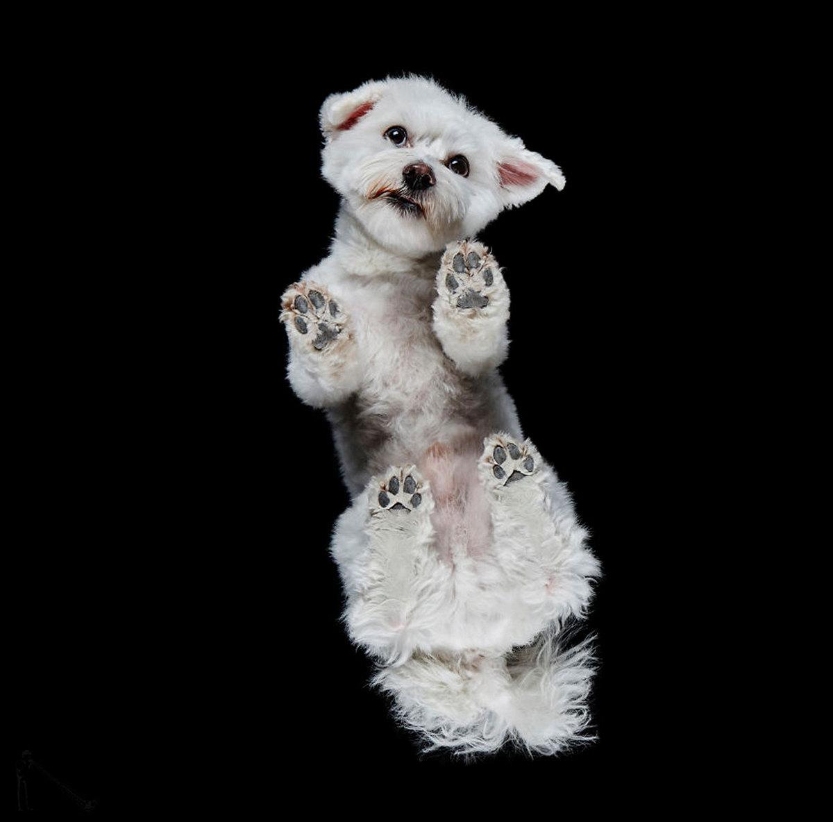 Взгляд снизу: животные с нового ракурса в фотопроекте Андриуса Бурбы
