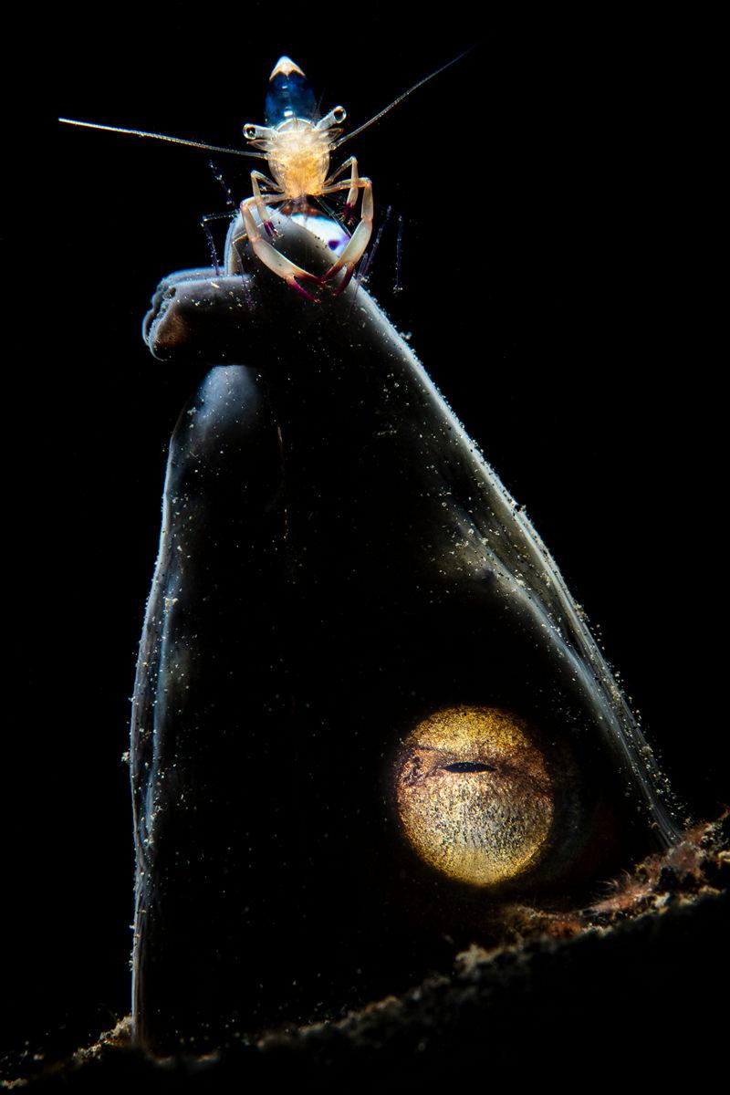 Жизнь морских глубин в работах победителей конкурса «Подводный фотограф года – 2019» 10