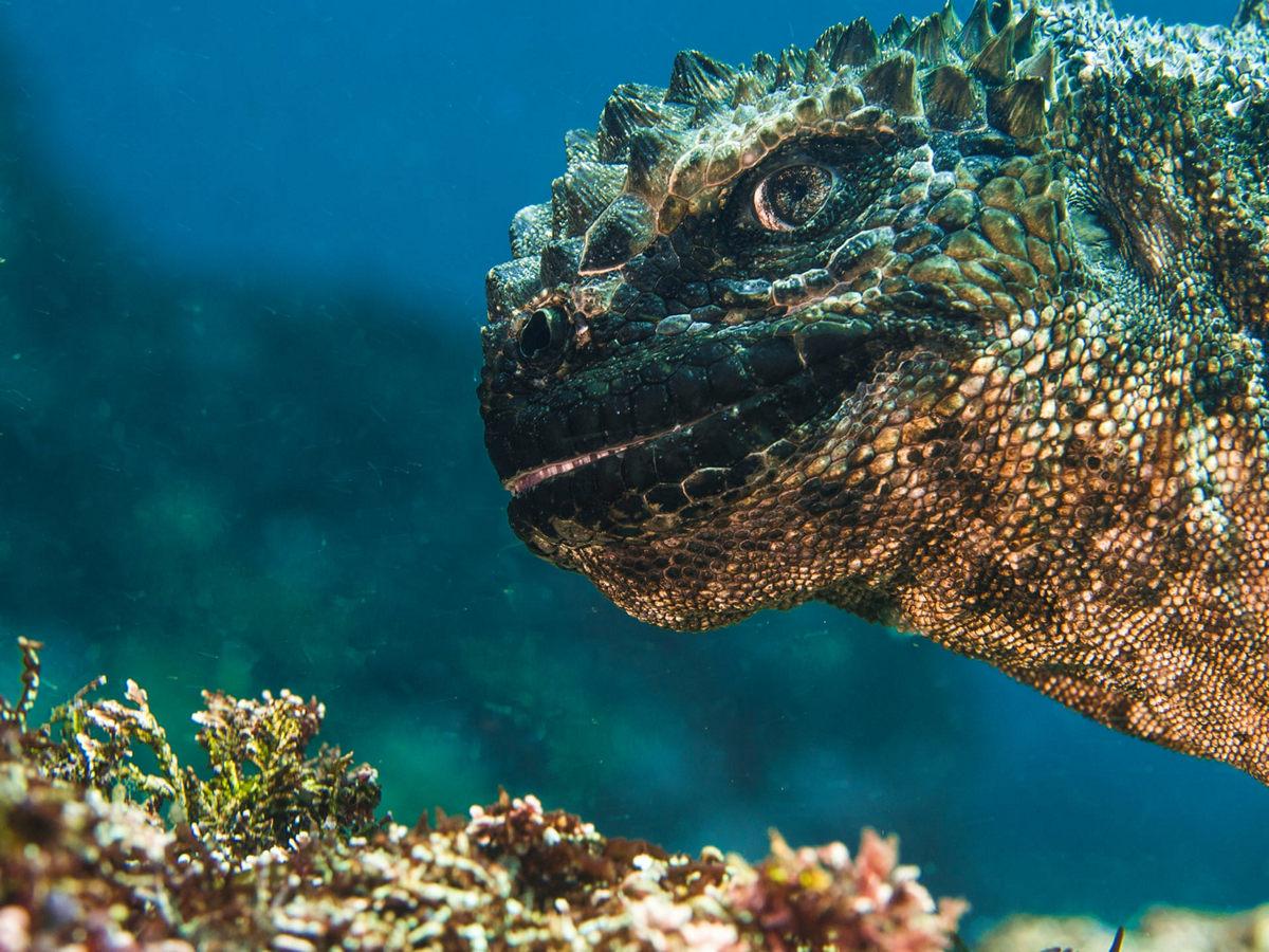 Жизнь морских глубин в работах победителей конкурса «Подводный фотограф года – 2019» 12