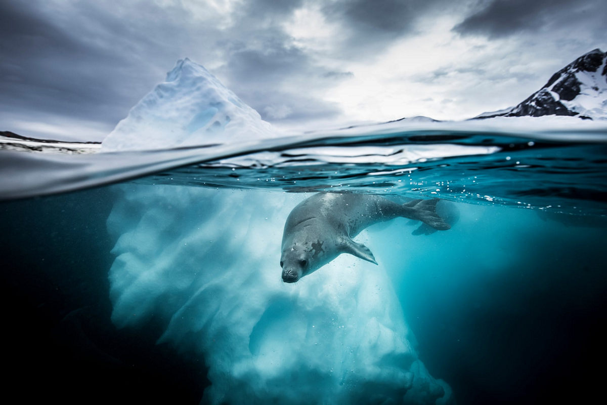 Жизнь морских глубин в работах победителей конкурса «Подводный фотограф года – 2019» 2