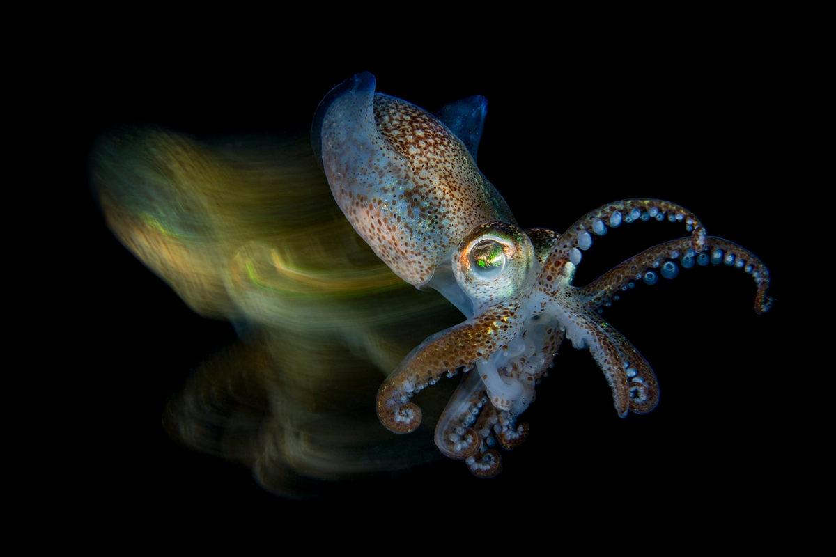 Жизнь морских глубин в работах победителей конкурса «Подводный фотограф года – 2019» 3