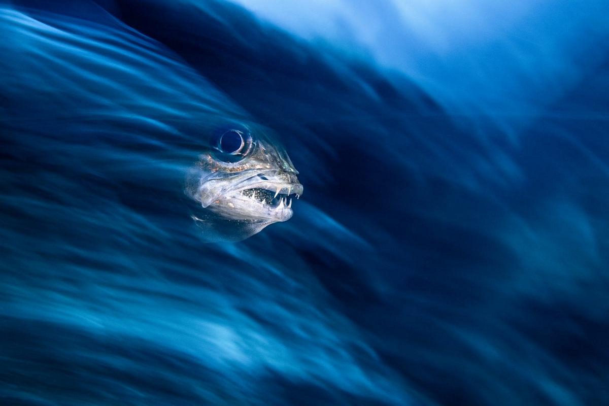 Жизнь морских глубин в работах победителей конкурса «Подводный фотограф года – 2019» 5