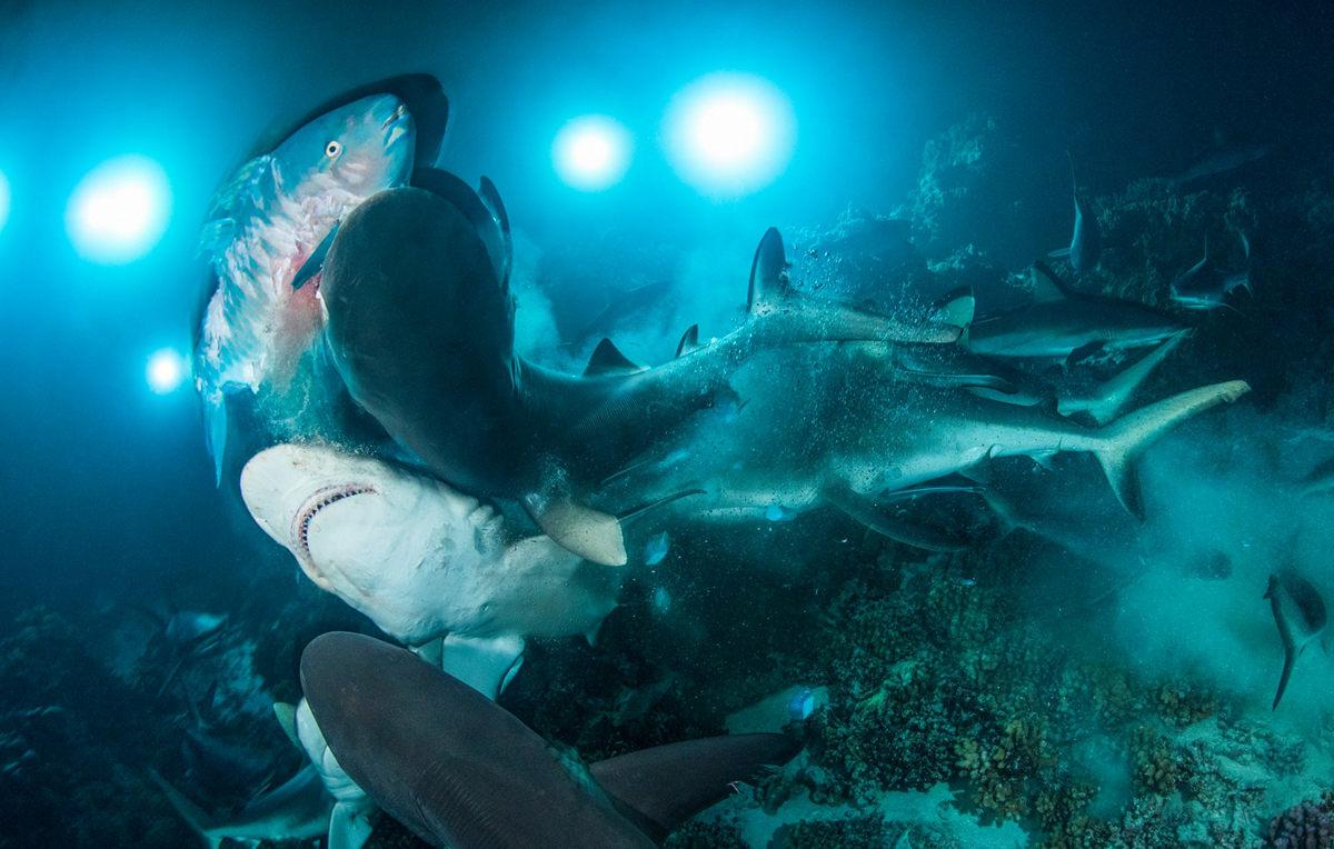 Жизнь морских глубин в работах победителей конкурса «Подводный фотограф года – 2019» 8