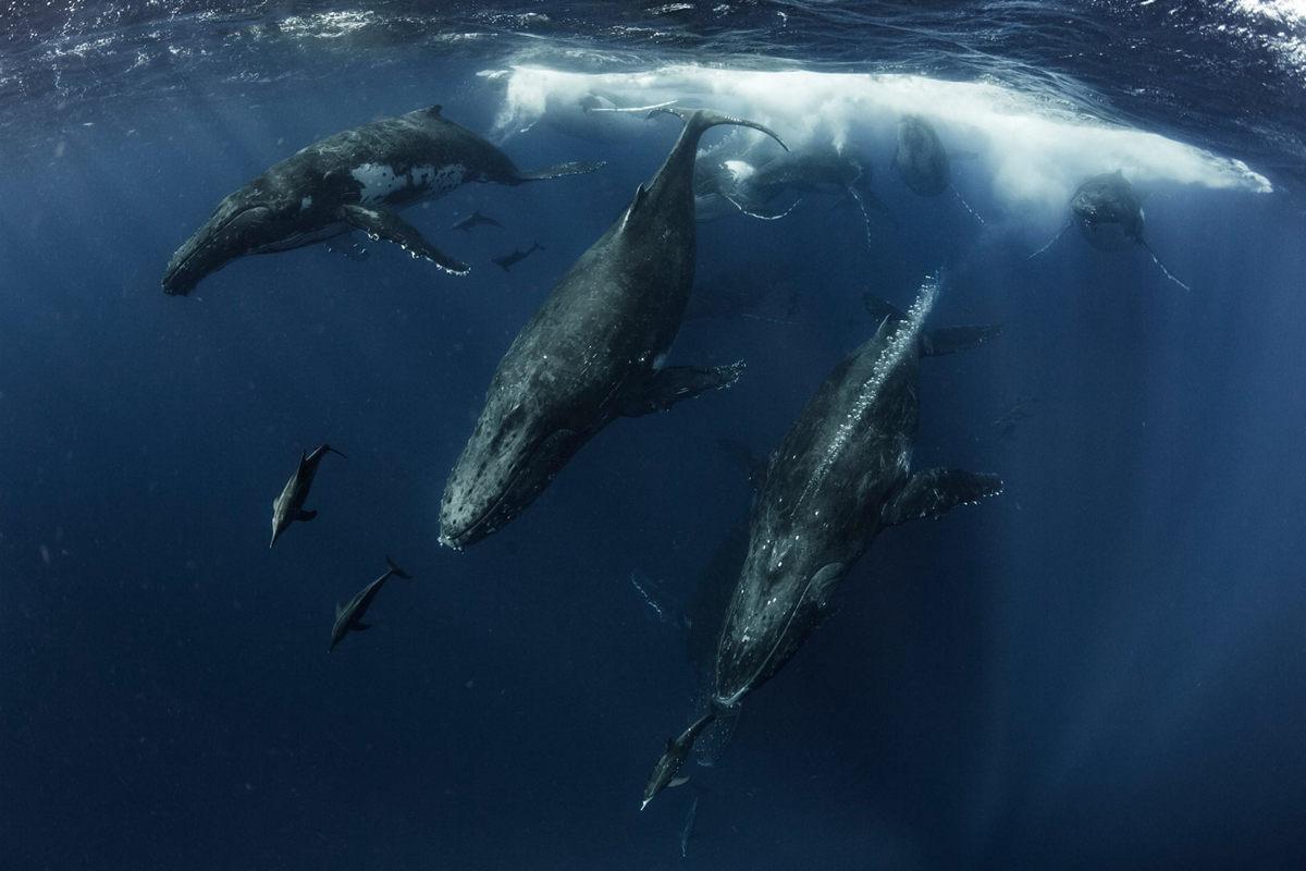 Жизнь морских глубин в работах победителей конкурса «Подводный фотограф года – 2019» 9