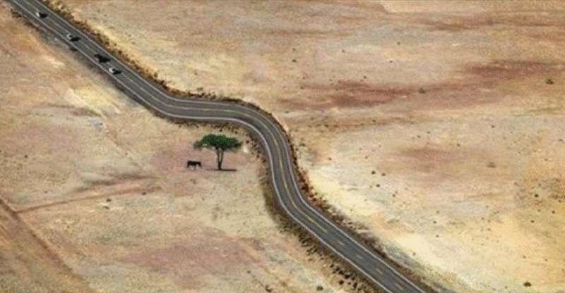 Подборка фотографий деревьев, чья судьба сложилась вопреки цивилизации