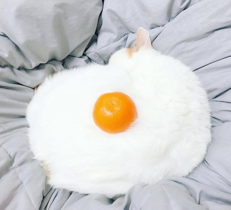funny_pets_18